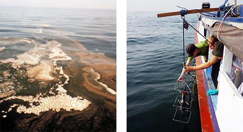 Gruppe Küstenökosysteme