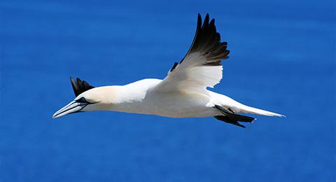 Gruppe Ökologie Mariner Tiere