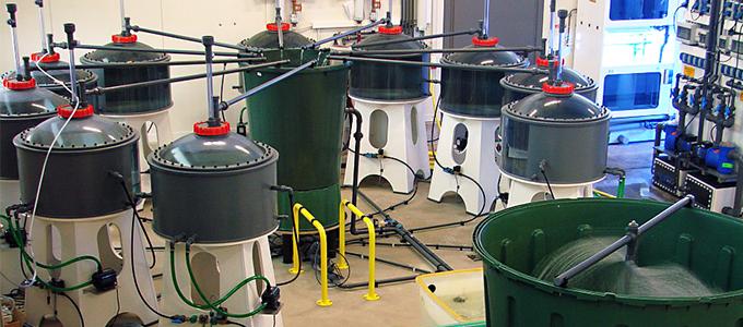 Fisch-Respirationsanlage mit 10 Becken zu je 250 Litern