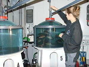 Fish feeding in a tank