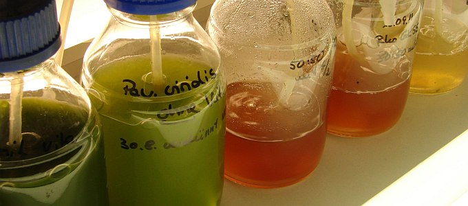 Image of different microalgae
