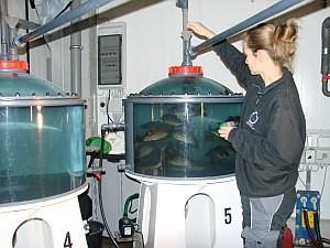 Fish feeding in a tank